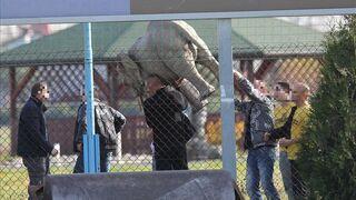 Pijani Polacy ukradli słonia
