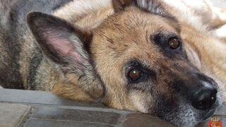 """Zaginiony pies sam """"zgłosił się"""" na policję. Po roku!"""