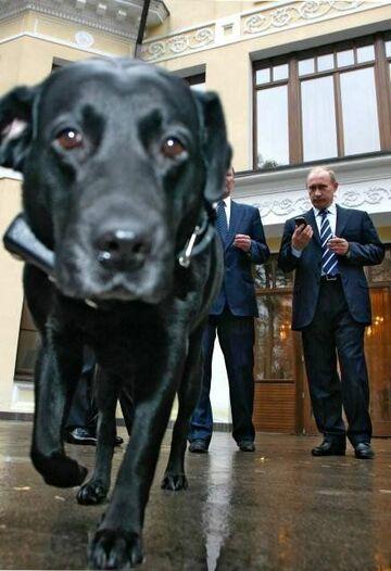 Putin testuje nawigację satelitarną na swoim psie