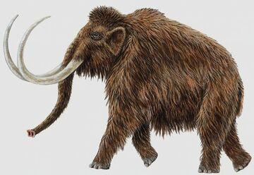 Mamy DNA mamuta włochatego