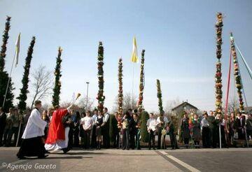 Najwyższa palma w historii Lipnicy: 33 metry i 45 centymetrów