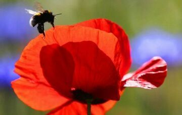 Pszczoły nie chcą pracować na nocną zmianę