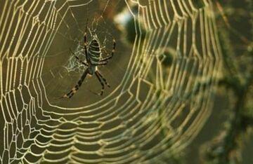 Z dezodorantem i zapalniczką na pająka