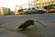 Włożyła szczura do potrawy, żeby wymusić 500 tys. dolarów