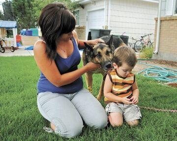 Pies pilnował ciała zmarłego pana przez 6 tygodni