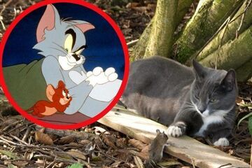 Tom i Jerry istnieją naprawdę!