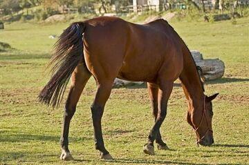 Nastolatek zgwałcił konia!