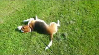 Pies na trawie:)