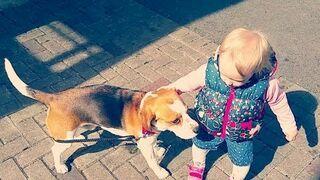 Dziecko uczy się prowadzić psa na smyczy:)