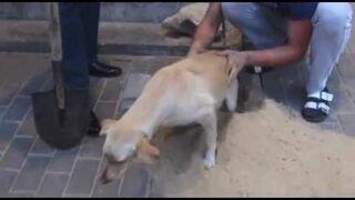 Przez dwa dni pies był uwięziony pod chodnikiem!