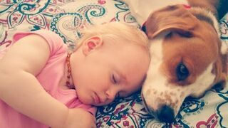 Cudowne życie psa z dzieckiem