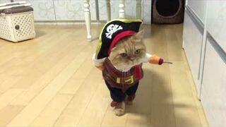 Strój dla kota - pirat!