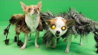 SpiderDog 2 - Halloween Prank