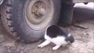 Bardzo sprytna mysz!