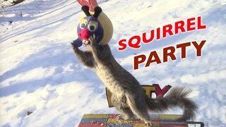 Najlepszy karmnik dla wiewiórki
