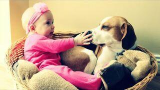 Mały pies o dużym sercu
