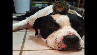 Wiewiórka ma ochronę