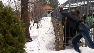 O tym, jak Rosjanin chciał pogłaskać niedźwiedzia