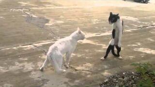 Cat Fails Compilation vol 1