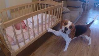 Smart Dog Gently Rocks Baby Cradle