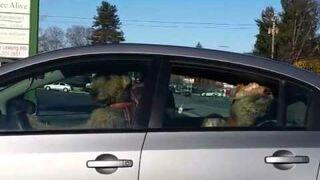 Psy niecierpliwie czekają na pana, w samochodzie!