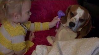 Takiego weterynarza psy nie muszą się obawiać
