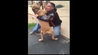 Mężczyzna odnajduje swojego psa po dwóch latach