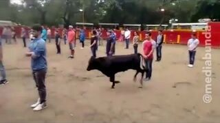 Eksperyment z bykiem i studentami na arenie