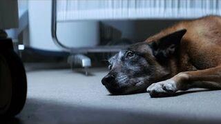 Emotional Pet Campaign – 30 Millions d'Amis Foundation