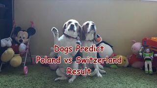 Psy przewidują wynik Polska-Szwajcaria