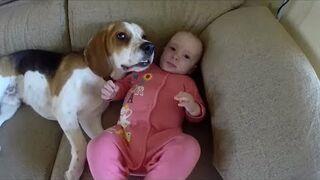 Psa można nauczyć wszystkiego, ale nie trzeba go uczyć jak kochać