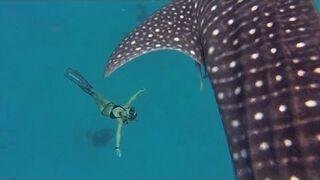 Największy rekin na świecie