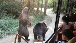 Niedźwiedzie proszą turystów o jedzenie
