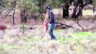 Dał w pysk kangurowi po tym jak ten zaatakował jego psa