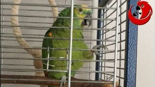 "Śpiewająca papuga Eryk - ""Kukułeczka kuka i Wlazł Kotek na Płotek"" (Eric The Talking Parrot)"