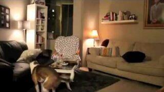 Co robi pies, gdy jest sam w domu?