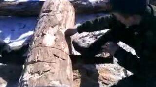 Jak Rosjanie odpalają piłę do rżnięcia drzewa