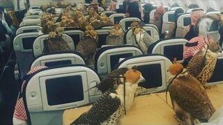 Saudyjski książę kupił 80 sokołom bilet na samolot