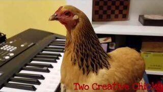Kura grająca na keyboardzie
