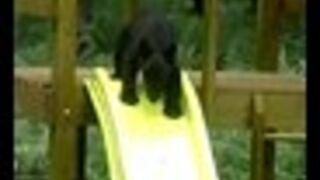 Niedźwiadki na zjeżdżalni