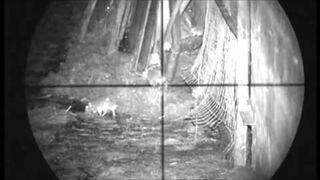 Zastrzelił 120 szczurów z wiatrówki wyposażonej w noktowizor optyczny