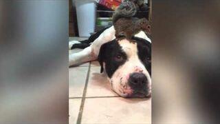 Pies zaprzyjaźniony z wirówką