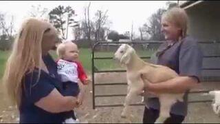 Rozmowa dziecka z kozą