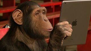 Szympans daje się nabrać na sztuczki z iPada