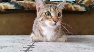 Rekcja kota na film-horror