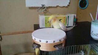 Papuga, bębenek i muzyka metalowa