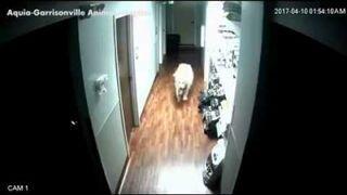 Pies daje łapę ze szpitala zwierzęcego. Nie straszne mu żadne drzwi
