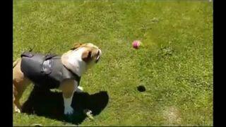 Jak zabawić psa piłeczką na wiele godzin