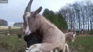 Zwierzęta lubię się przytulać