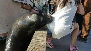 Lew morski wciągnął dziewczynkę do wody
